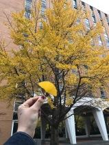 Autumn is beyond beautiful